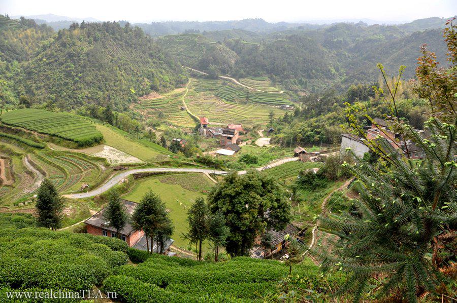 Чайная деревушка Байлю Цунь. Родина Байхао Иньчжэнь.