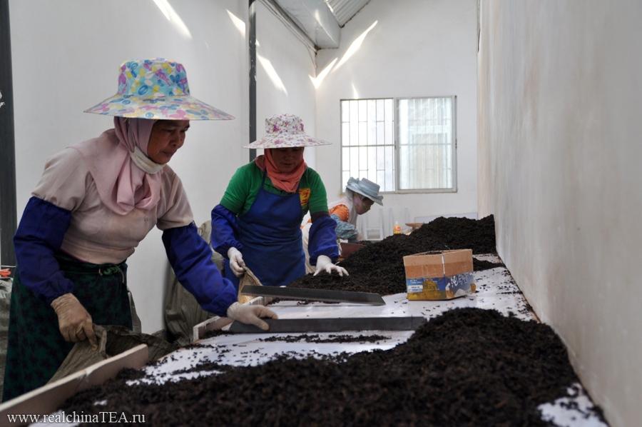 Чайные тетушки перебирают темный Шу Пуэр на одном из заводов в провинции Юньнань. Уже после того, как он прошел процесс ускоренной ферментации. Но еще до того, как его спрессовали в блины.