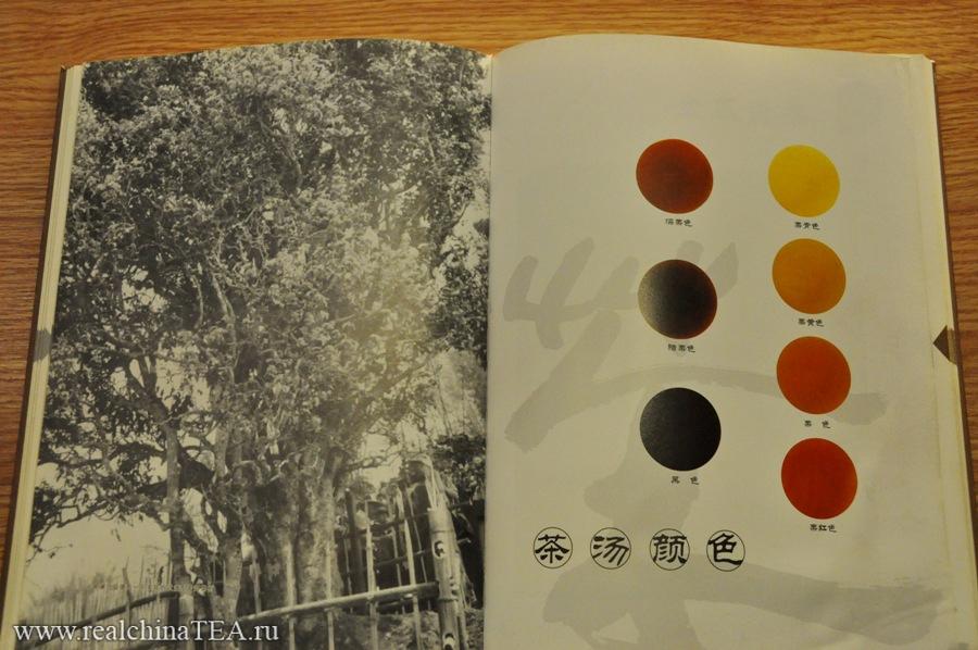 На этом фото наглядно видно, как светлые Шен Пуэры меняют свой цвет и темнеют каждые пять лет.