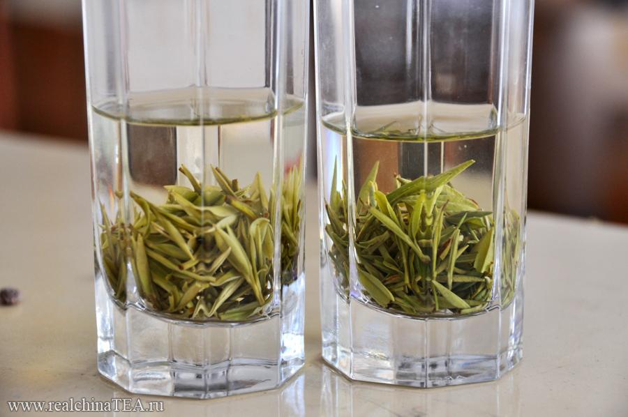 В левом стакане Аньцзи Байча прошлого сезона. В правом - свежий урожай. На этом снимке наглядно видно, как отличается чайный лист по цвету.