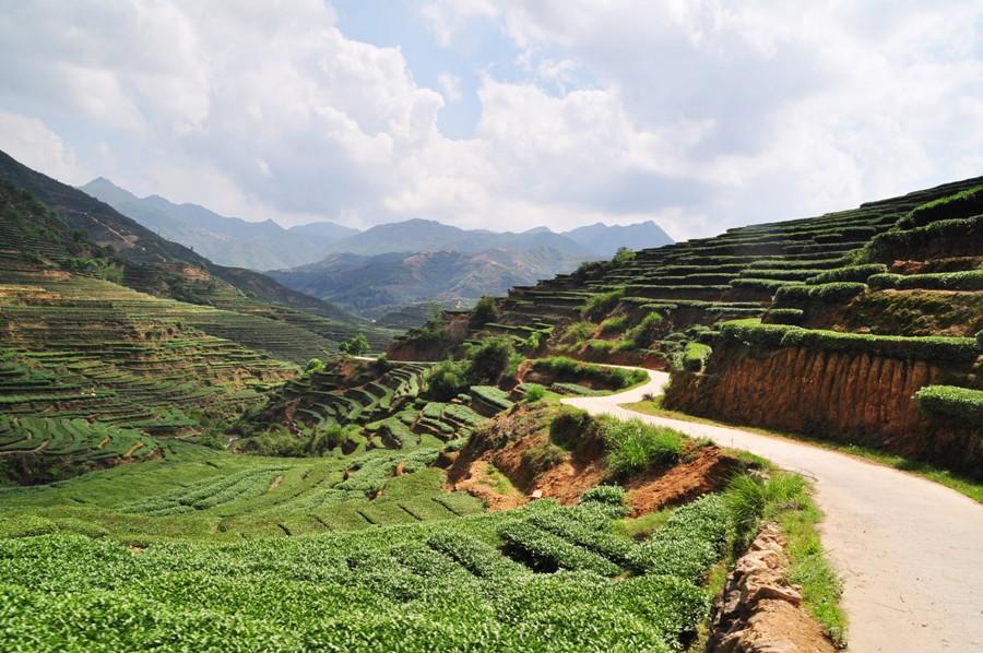 Чайные плантации в Аньси