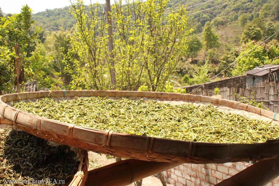 И вот на таких плетеных чайных подносах чайный лист проходит процесс ферментации под открытым солнцем.