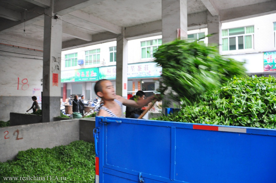 Это только потом, после обработки и упаковки, чай станет чаем в нашем понимании. А пока это сельскохозяйственный продукт. И с ним тут не особо церемонятся. Хотя, конечно, с дорогими сортами чайного листа обходятся бережнее.