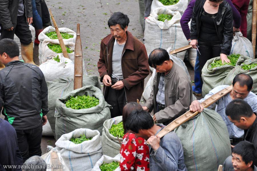 Фермеры продают сырой чайный лист владельцам мануфактур по производству чая.