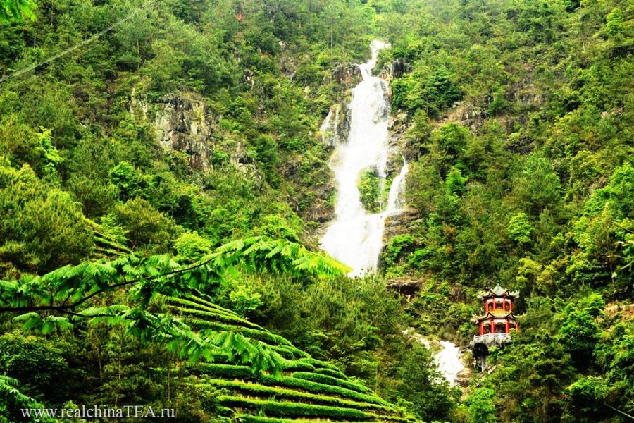 Горный водопад прямо над плантациями с чаем в уезде Аньси.