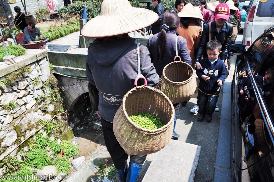 Вот в такие плетеные корзины собирается чай Лунцзин. Интересно то, что в разных провинциях чай принято собирать в разные корзины. Так, например, в провинции Фуцзянь при сборе Тегуаньинь корзины выглядят совсем иначе - они значительно больше и шире. А в провинции Юньнань листья Пуэра собирают вообще в гигантские заплечные корзины с закрывающейся крышкой.