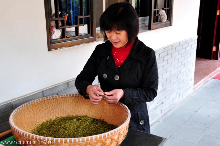 А это жена мастера. Она перебирает свежий чай, оставляя в корзине только лучшие листочки.