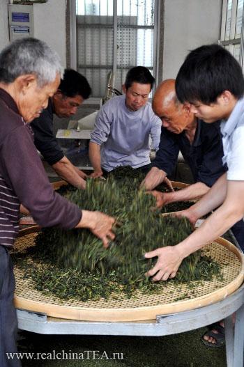 Чайные мастера обрабатывают свежий сбор Тегуаньинь вручную.