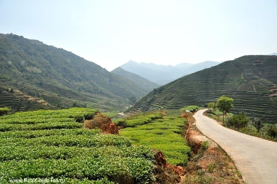 Чайные туры в Китай. www.realchinatea.ru