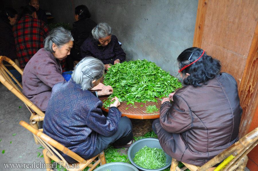 Чайные тетушки занимаются переборкой сырья для производства различных сортов белого чая.