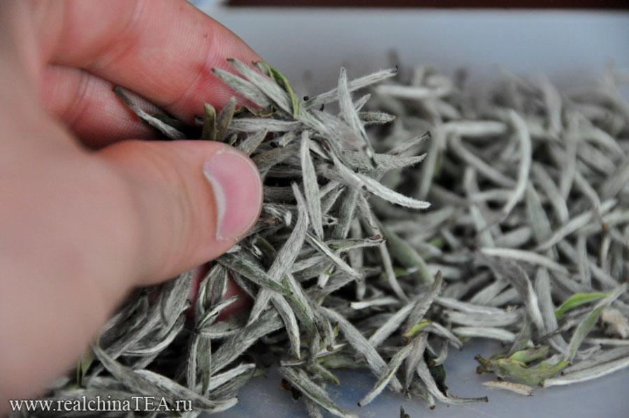 Так выглядит белый чай Байхао Иньчжэнь www.realchinatea.ru