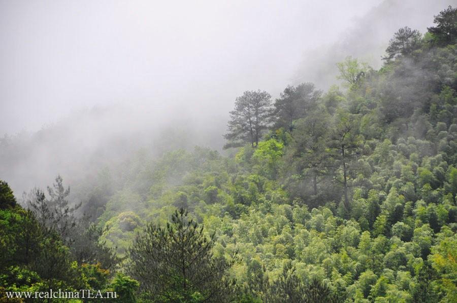 Тут часто можно увидеть картину, когда облака лежат прямо на горах.