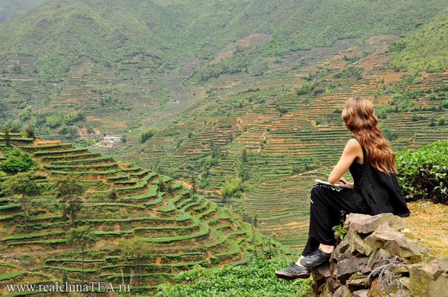 Чайные плантации. Мне кажется - это одно из лучших мест, чтобы перезагружать голову.