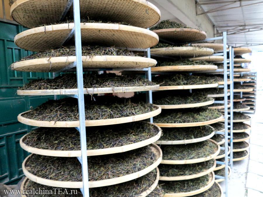 Чайные подносы, на которых досушивается только что приготовленный Дахунпао.