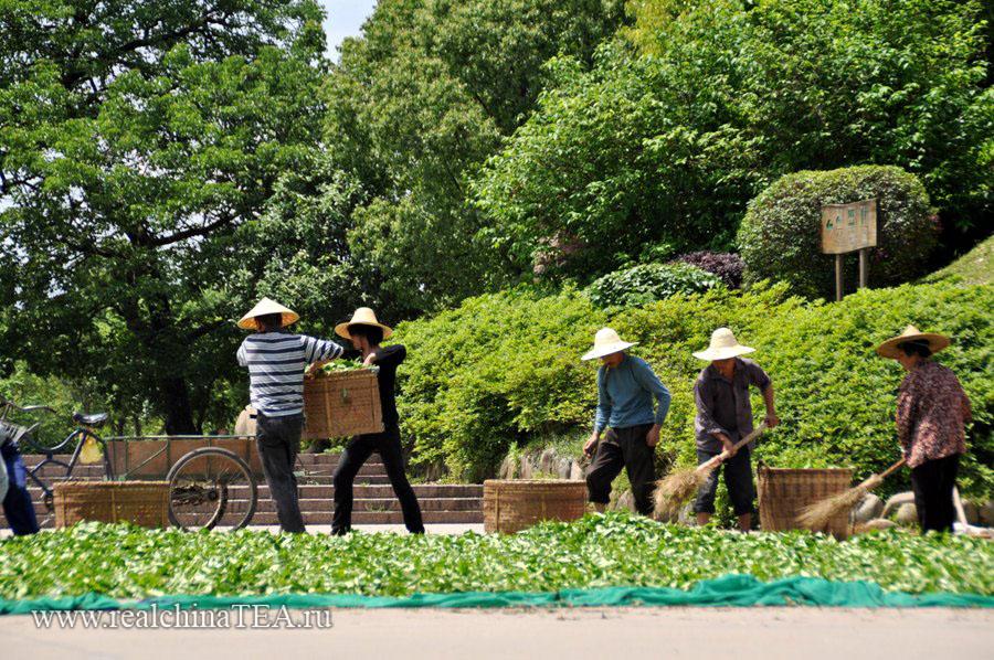 Деревня фермеров в Уишане - 天心岩茶村 - весной тут закипает жизнь!