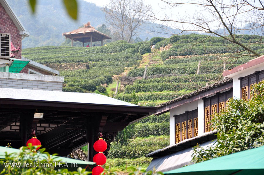 Плантации чая Лунцзин