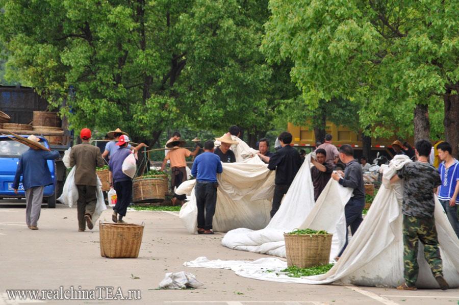 Чайная движуха в Уишань. Разгар чайного сезона.