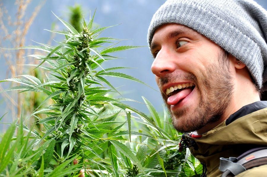 Заросли марихуаны )))))))