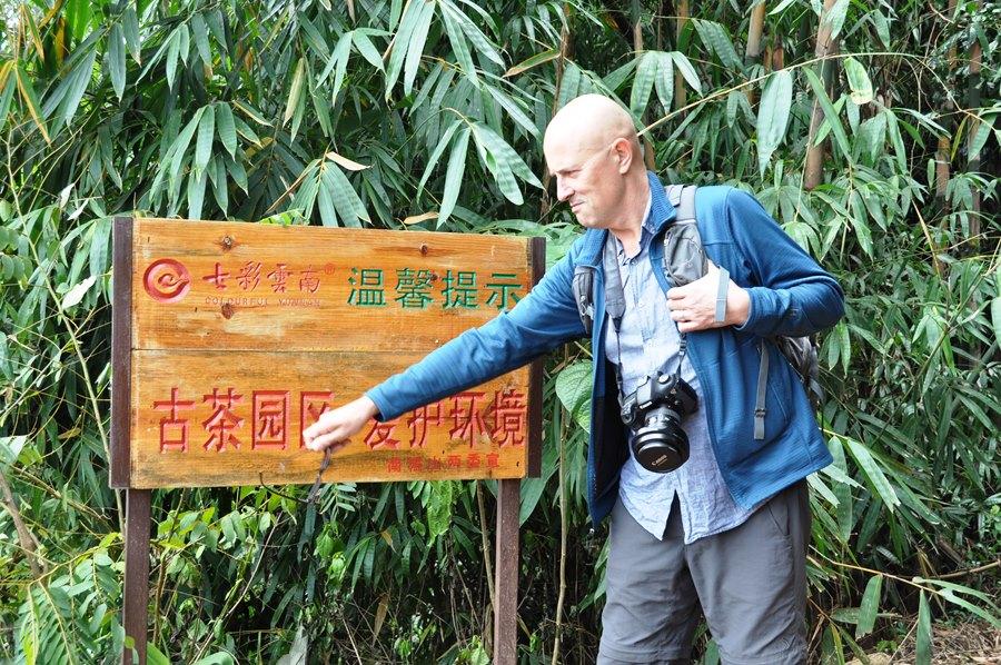 Место произрастания старых чайных деревьев - надпись на табличке.