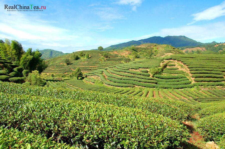 Чайные плантации Дахунпао в Китае. Город Уишань.