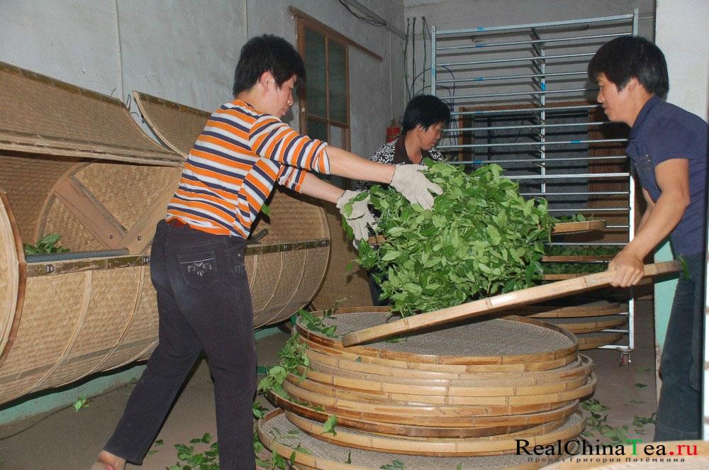 Ферментация Те Гуанинь