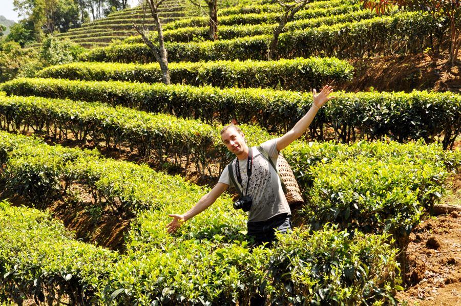 Чайные плантации в районе гор Цзи Но.