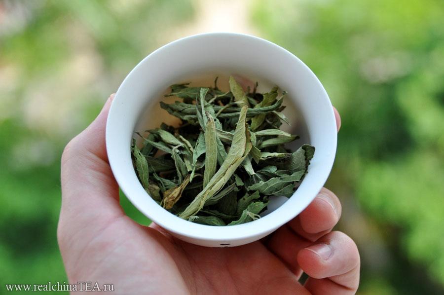 Стевия. Ее можно использовать как самостоятельный напиток и заваривать в гайвни, а можно и как добавку к другим чаям.