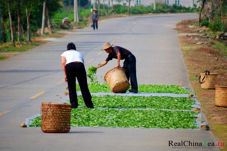 Как сушат чайный лист в Китае