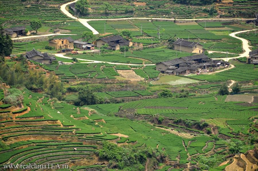 Чайная деревня в уезде Фудин. Тут я закупаю Баймудань.