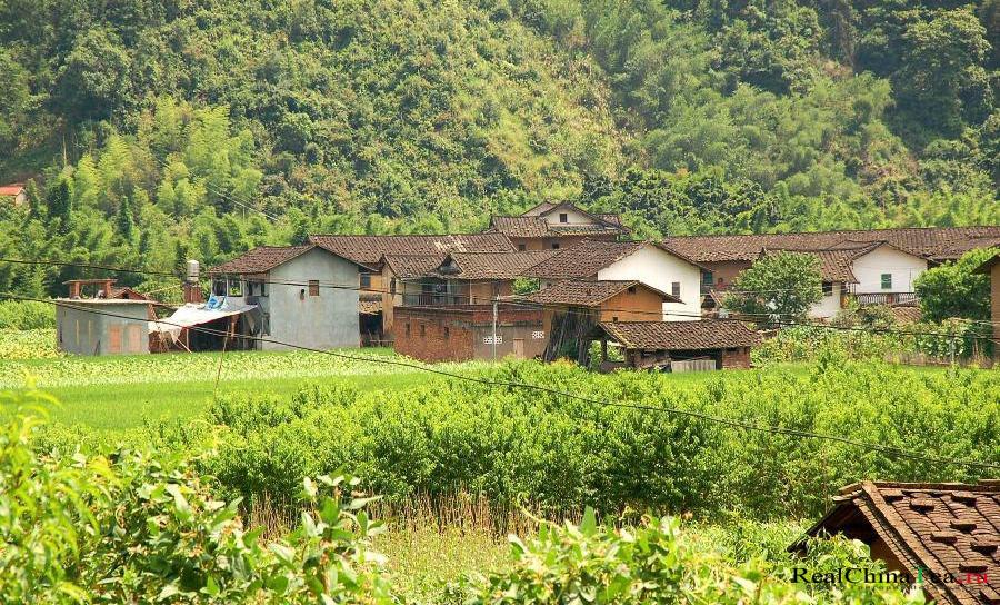 Одна из высокогорных деревушек в уезде Аньси, где производят черный Тегуаньинь