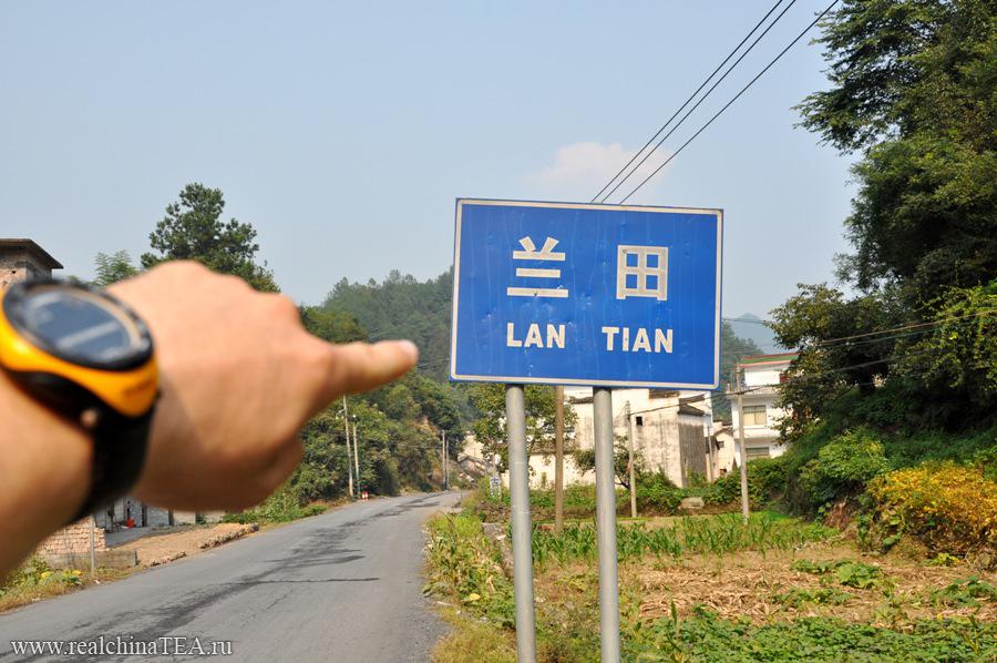 Провинция Аньхой, уезд Хуаншань, деревушка Лантянь - одно из лучших мест для сбора цветов хризантемы.