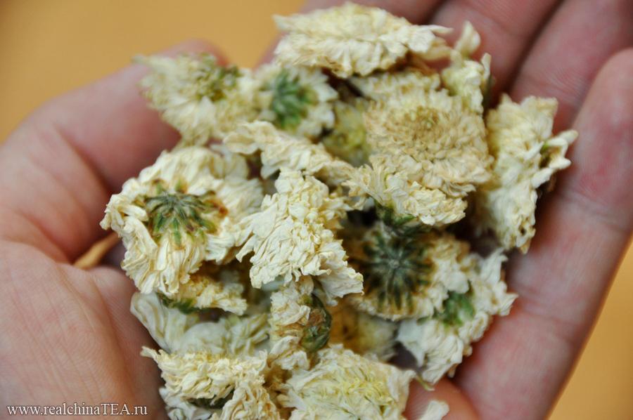 Цвет хризантемы в сухом виде выглядит довольно уныло, но все меняется в миг...