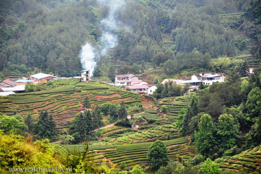 Чайные плантации. Снова. И снова. У нас в турах очень много чайных плантаций. Очень.