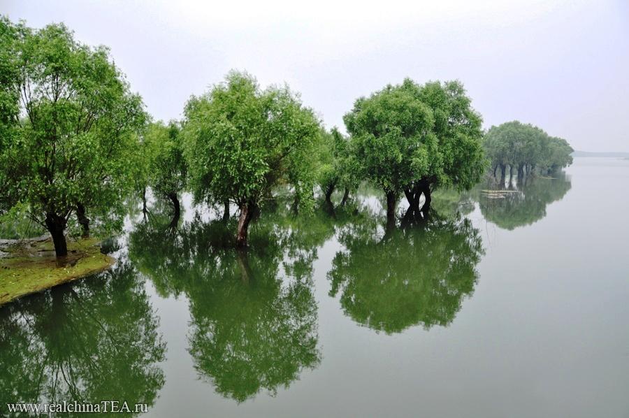 Озеро Дунтин. www.realchinatea.ru