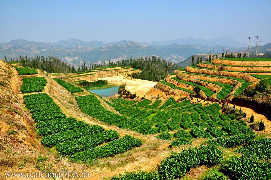 Высокогорные чайные плантации Аньси