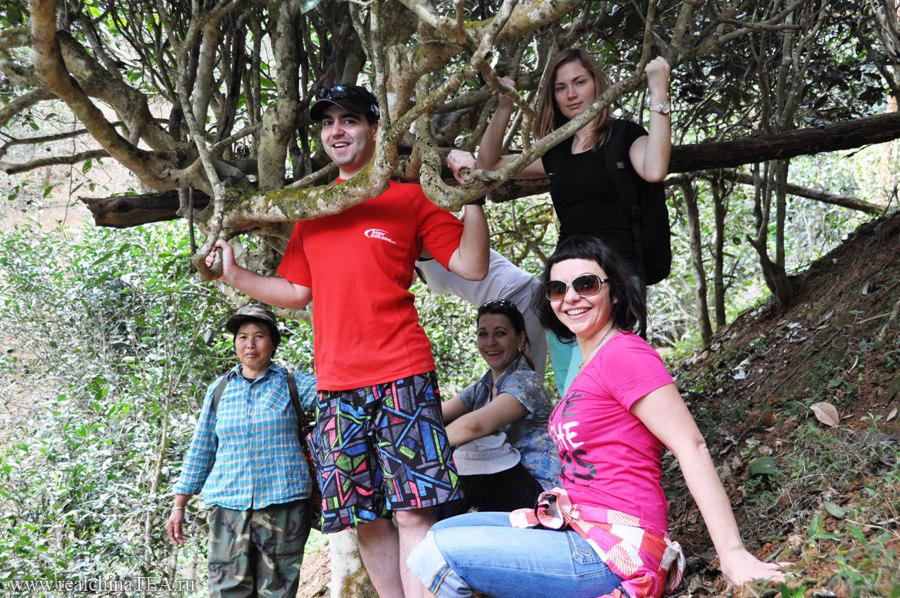 Старые чайные деревья - существуют!! Веселый парень в трусах на переднем фоне - это Леша. Не анализируйте его - примите таким, как есть! )))