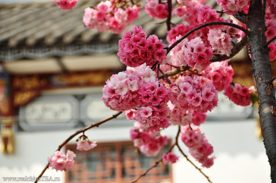 Дали еще называют городом вечной весны.