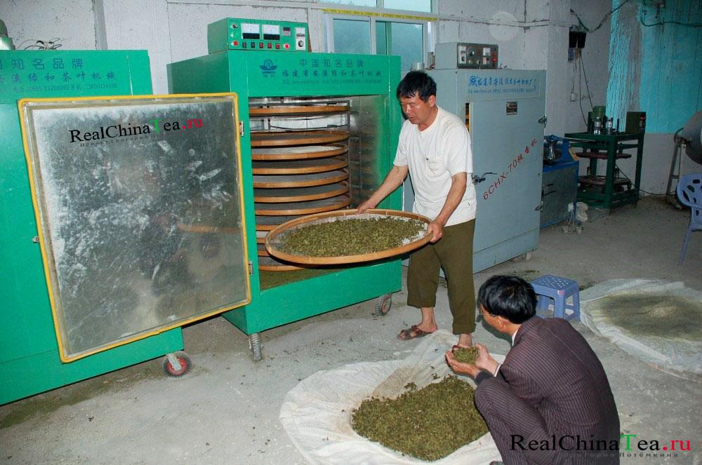 Ферментация зеленого чая