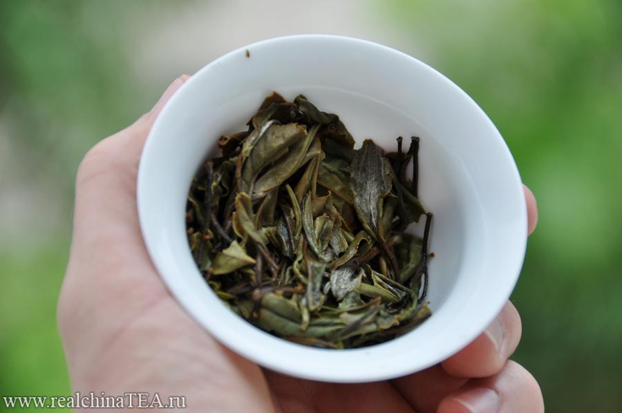 Заваренный лист белого чая Гунмэй