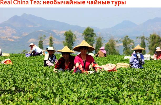Портал GBtimes o чайных турах в Китай.